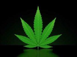 WEBINAIRE : Êtes-vous prêts à faire face aux enjeux reliés à la légalisation du cannabis dans votre entreprise?