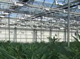 GUIDE PRATIQUE : Comment s'adapter à la légalisation du cannabis dans les milieux de travail?
