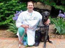 L'entreprise gatinoise Creadditive commercialise le premier implant chirurgical vétérinaire imprimé en 3D